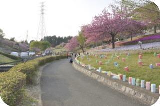 八重桜祭り